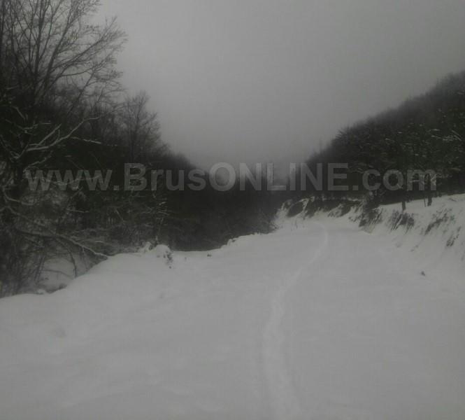 Borance Stanulovici 012017 2
